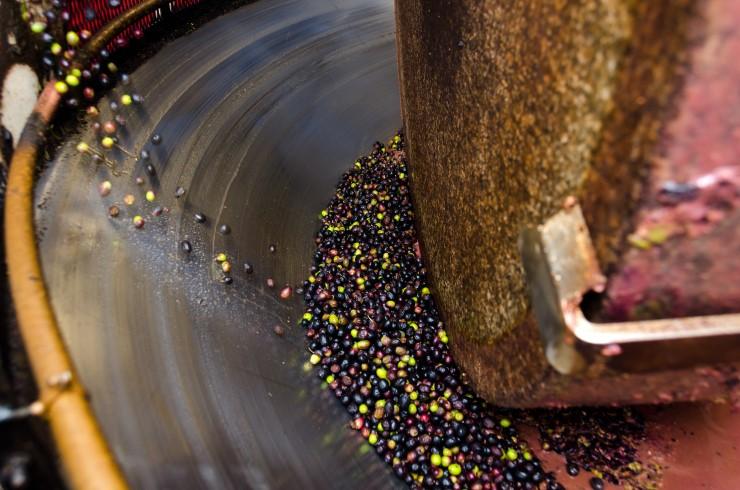 La molitura delle olive, processi e caratteristiche